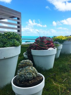 Succulent Garden, 1 Hotel
